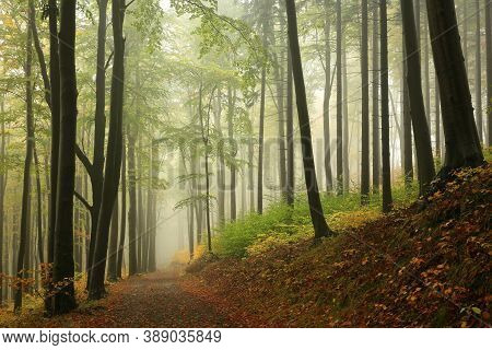 Trail path trees autumn forest woods Nature background mist fog alley Nature background nature parkway Nature background road Autumnal Nature background leaves foliage Travel Nature background Nature background Nature background Nature background fall.