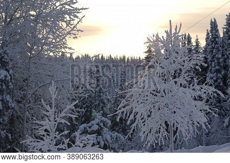 Winter Cold, Trees, Frost, Snow Sunset, The Trees Are Covered With A Thick Layer Of Frost