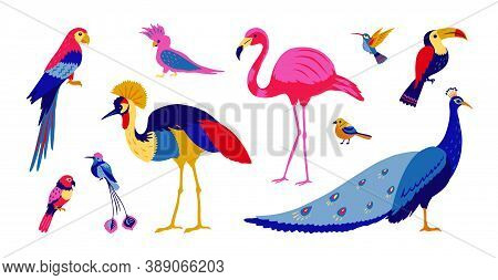 Tropical Birds. Exotic Colorful Parrots And Jungle Forest Birds, Isolated Collection Of Southern Wil