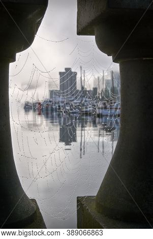 Coal Harbour Stanley Park Cobwebs. The Vancouver Skyline From The Stanley Park Seawall On A Foggy Mo