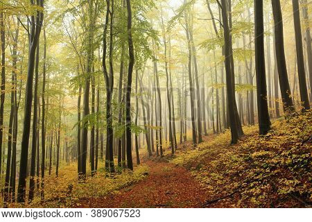 Path trees Nature autumn forest woods Nature background landscape Nature fog fall Nature landscape orange Nature background landscape Nature landscape yellow landscape Nature background Nature background landscape Nature landscape Nature background.