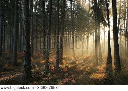 Autumn forest Nature sunrise sun landscape Nature background Nature landscape Nature woods landscape Nature background landscape trees Nature background Nature landscape landscape Nature background Nature landscape light Nature landscape Nature background