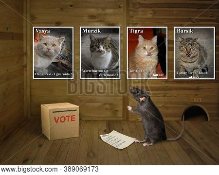 A Black Rat With His Vote Stands Near The Ballot Box At A Polling Station. It Has A Difficult Choice