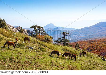 Autumn in Pollino National Park, southern Italy.  View from Serra Di Crispo.