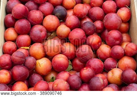 Lots Of Red Plums In The Box, Backdrop Background. Harvest Red Plum In The Market, Farmer's Sweet Ri