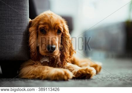 Portrait Of A Dog On Street. Close Up Of Dog. Cute Little Dog Portrait. Beautiful Dog.