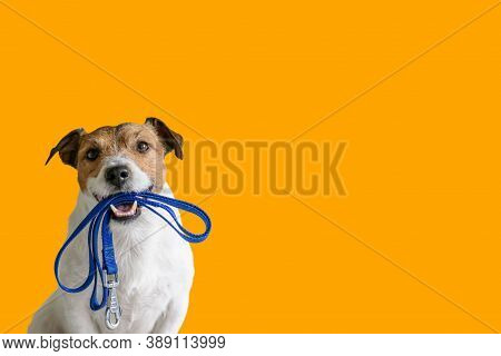 Dog On Street. Small Dog On Street. Close Up Of Dog. Cute Little Dog Portrait. Beautiful Dog. City D