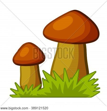 Mushrooms. Autumn Element Of Forest And Nature. Natural Food. Large And Small Cep. Green Grass. Deta