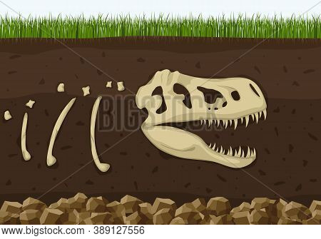 Dinosaur Fossil Skeleton In Soil Layers, Dinosaurs Reptile Skull . Archeology Buried Bones, Ancient