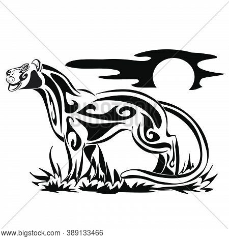 Zoo. African Fauna. Puma, Leopard, Wild Cat, Coguar, Mountain Lion. Hand Drawn Illustration For Tatt
