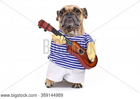 French Bulldog Dog Dressed Up As Guitar Player Wearing A Costume With Striped Shirt, Pants And Fake