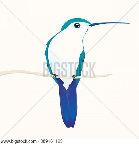 Hummingbird Sitting On A Branch On A White Background.