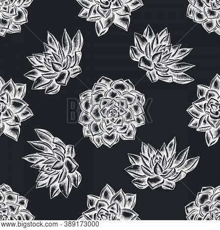 Seamless Pattern With Hand Drawn Chalk Succulent Echeveria, Succulent Echeveria, Succulent Stock Ill