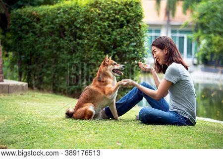Asian Woman Plays With The Shiba Inu Dog In The Backyard. Young Woman Teaching And Training Dogs To