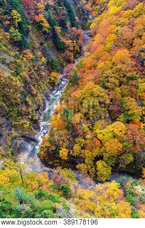 Aerial view of Autumn Fall Landscape of Forest and woods with river over Jogakura Ohashi Bridge in Aomori Tohoku Japan