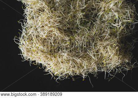 Alfalfa Sprout Macro Close Up