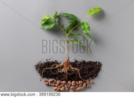 Young Green Plant With Soil And Drainage On Gray Background With Water Drops. Concept Of The Environ