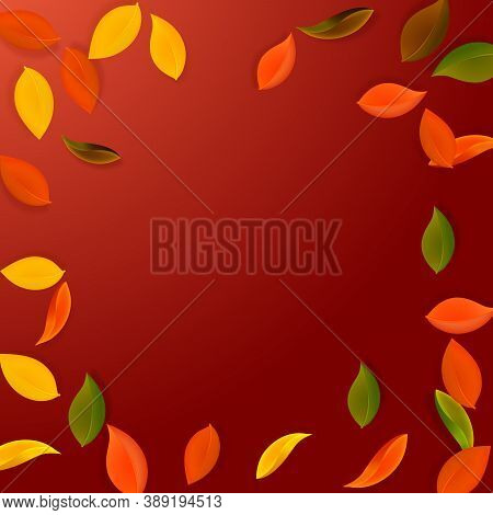Falling Autumn Leaves. Red, Yellow, Green, Brown Neat Leaves Flying. Vignette Colorful Foliage On Ex