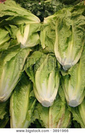 Lettuce For Sale