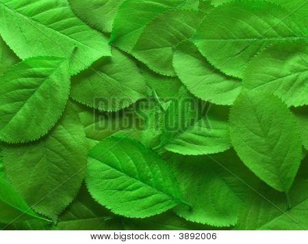 Juicy Green Leafs