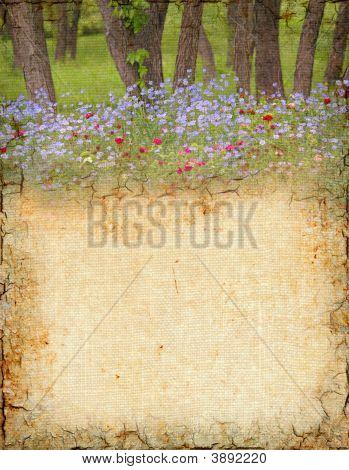 Woodland Background