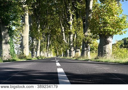 France, Languedoc Roussillon, Plane Trees Flanked Road