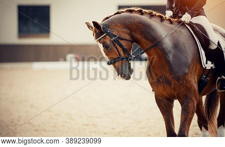 Equestrian Sport. Portrait Sports Red Stallion With A White Groove On His Forehead In The Bridle. Th