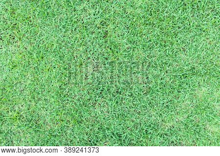Grass And Lawn Texture With Green Color Background For Eco And Nature Concept. Lawn Is An Area Of So