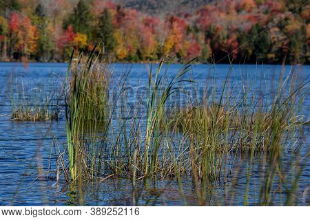 Green grass in water with autumn colored trees in background