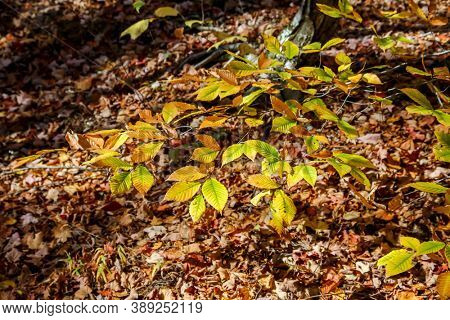 Beautiful yellow colored leaves in forest