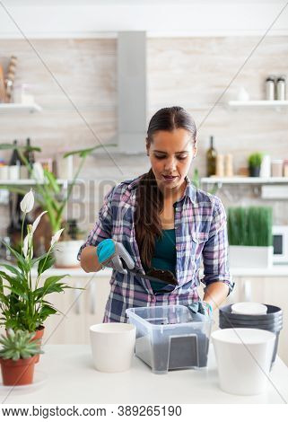 Housewife Gardening In The Kitchen At Home Using Gloves And Shovel. Decorative, Plants, Growing, Lif