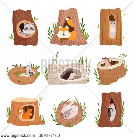 Holes In Tree. Home Hollow For Wild Animals Trunk Leaves Treetops Birds And Squirrel Vector Characte