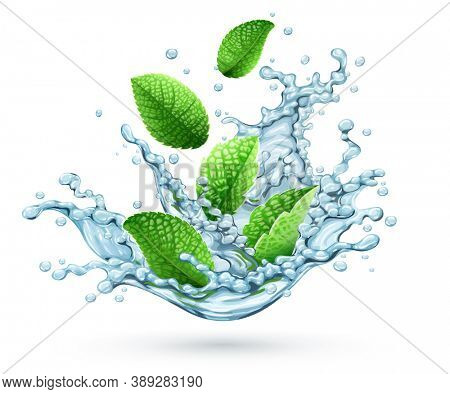 Realistic water splash with green peppermint leaves falling down. Fresh cool herbal drink with brandy mint for mojito or lemonade. isolated on transparent white background. 3D illustration.