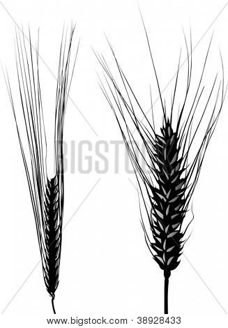 illustration with two ear silhouettes isolated on white background