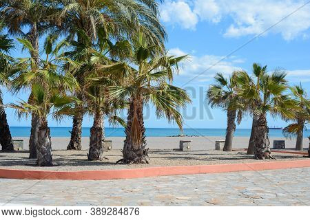 Empty European Beach With Many Palm Trees
