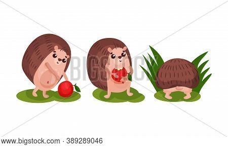 Cute Hedgehog With Prickles Eating Apple Vector Set