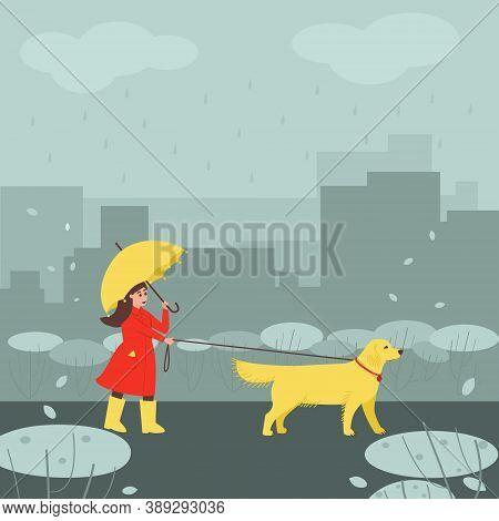 A Girl In Rainy Autumn Weather Walks Her Labrador Dog. The Girl Walks Under An Umbrella. Golden Labr