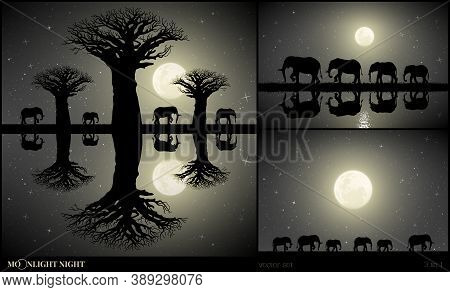 Elephant Family Walking Between Baobab Trees On Moonlight Night. Landscape With Big Animals On River