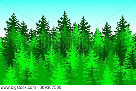 Forest Background, Nature, Landscape Evergreen Coniferous Trees Vector
