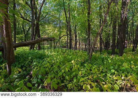 In The Forest At Fort Snelling State Park Minnesota