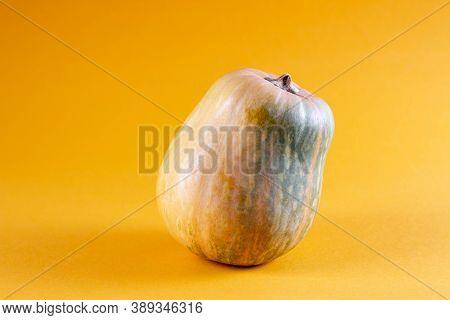 Pumpkin On Orange Color Background, Copy Space. Composition Pumpkin, Squash Gourd Mockup. Pumpkin Mo