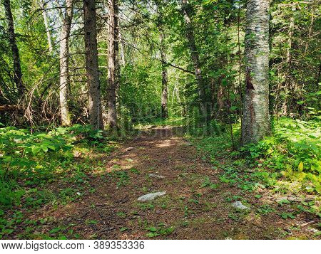 A Beautiful Footpath On The Baldy Mountain Hiking Trail In Duck Mountain Provincial Park, Manitoba,