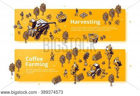 Coffee Farming And Harvesting Isometric Banners, Farmers Working On Field Care Of Plants And Collect