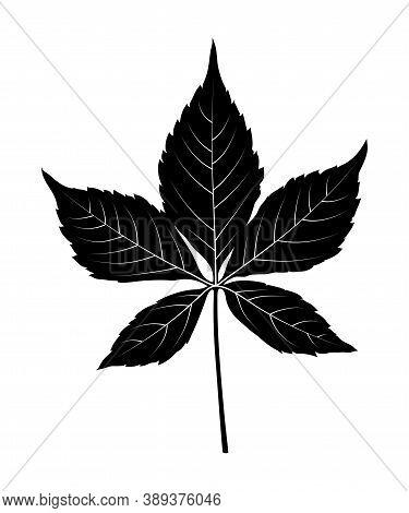 Vector Virginia Creeper - Victoria Creeper - Five-leaved Ivy (parthenocissus Quinquefolia) Leaf Silh