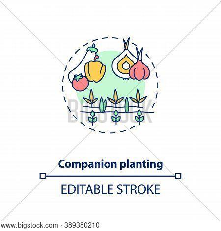 Companion Planting Concept Icon. Organic Farming Principles. Vegetables Growing Farm. Healthy Garden