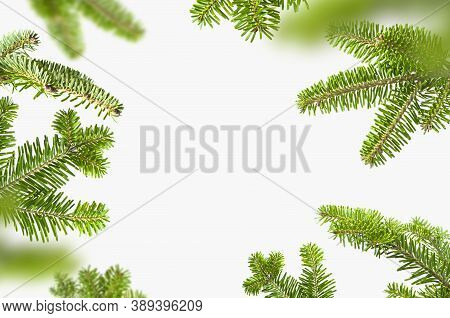 Fresh Green Spruce Branches On Light Gray Background. Fir Tree Frame, Christmas Or New Year Decorati