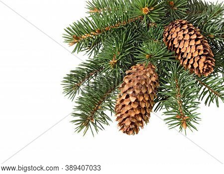 Christmas Ornament. Fir Tree Branch With Cones Isolated On White Background. Pine Branch.
