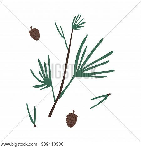 Evergreen Autumn Pine Branches And Cones From Tree Vector Illustration