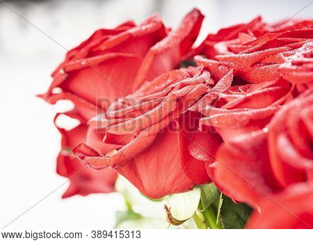 Red Natural Fresh Bouqet Of Roses Background Pattern, Macro Studio Shot With Water Drops