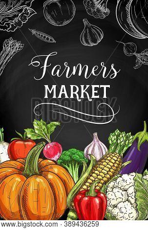 Farmers Market Vegetables, Greenery And Veggies. Bell Pepper, Corn Ear And Broccoli, Garlic, Eggplan